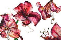 Image result for rosie sanders' Flowers