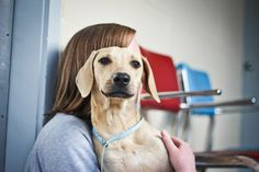 Hi, I'm Alex! I am a 1 year old Labrador mix. I am a very sweet boy but I am a little shy and sensitive. I may not be the first dog to run up and say hello, but that doesn't mean that I'm not excited to see you. I am a calm gentleman and I pride...