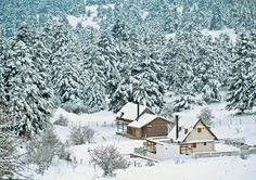 Parnassos Winter Destinations, Travel Destinations, Greek Flowers, Greek House, Forest Mountain, Paradise On Earth, Tree Forest, Flowering Trees, Greece Travel