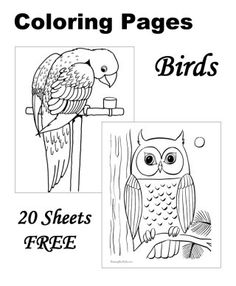 bird coloring pages 20 free printable sheets