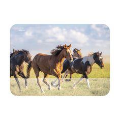 Kule klister til matboks - Bluum Eco Baby, Horses, Pure Products, Wool, Animals, Animales, Animaux, Animal, Animais