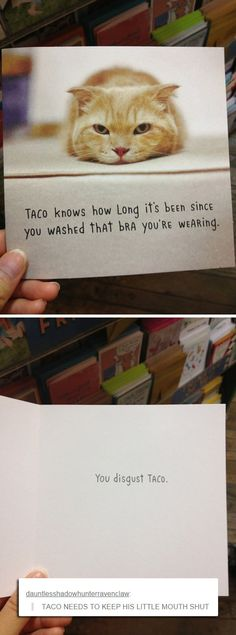 """Taco knows how long It's been since you washed that bra you're wearing."" ""You disgust taco."" ""Keep your mouth shut, Taco."" Funny greeting cards with cats"