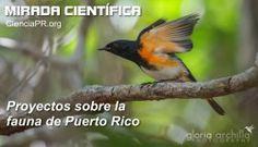 Proyectos sobre la #fauna de Puerto Rico #cienciapr