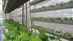 Image result for vertical urban farming