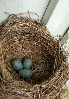 A bird nest Nest, Photograph, Bird, Nest Box, Photography, Birds, Photographs, Fotografia, Fotografie