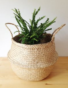 Sea Grass Belly Basket Panier Boule Storage by TalaHomeDesign Picnic Bag, Beach Picnic, Nursery Storage, Nursery Decor, Belly Basket, Magazine Storage, Oak Street, Furniture Placement, Interior Plants