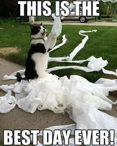 What is it about cats and toilet paper? Is it a secret obsession that our felines have? Or do they just like making a mess!
