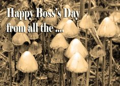 Boss's Day #Mushrooms in #Sepia Greeting Card