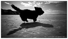 IMG_7184 - Tumbles in mid air by lost in space!, via Flickr