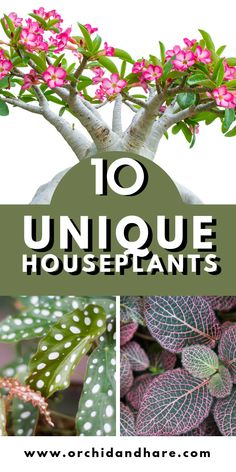 [WOW] 10 Unique and unusual houseplants. These plants are beautiful and perfect for any indoor garden. Bring color, texture and WOW into your plant decor. whatever you needs, one of these rare and unique indoor plants will be perfect Growing Vegetables Indoors, Growing Plants, Colorful Plants, Unusual Plants, Best Indoor Plants, Indoor Herbs, Low Light Plants, Foliage Plants, Air Plants