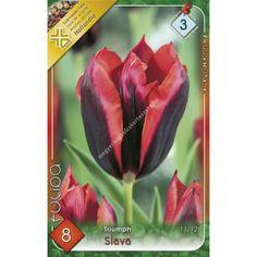 Triumph-típusú tulipán 'Slava' Eggplant, Vegetables, Food, Tulips, Essen, Eggplants, Vegetable Recipes, Meals, Yemek