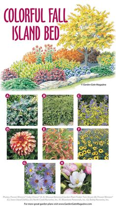 Want to spruce up your island bed? This garden plan is full of easy-care plants that really shine in Fall gardening hoe, companion gardening, gardening when to plant Flower Landscape, Landscape Design, Garden Design, Missouri Botanical Garden, Botanical Gardens, Garden Beds, Garden Plants, Flower Garden Plans, Flower Gardening