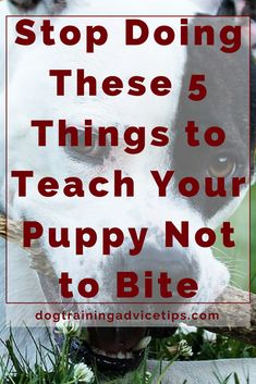 Stop Doing These 5 Things to Teach Your Puppy Not to Bite | Dog Training Tips | Dog Obedience Training | Dog Training Commands | Stop Dog Biting | Dog Biting Prevention | http://www.dogtrainingadvicetips.com/stop-doing-these-5-things-to-teach-your-puppy-not-to-bite-2