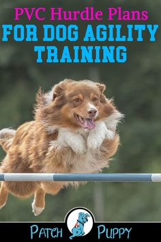 "Visit our post ""How to Make a Dog Agility Course Out of Household Items - 7 Different Stations!"" for PVC Hurdle Plans to make your own dog agility training course. Agility Training For Dogs, Basic Dog Training, Dog Training Classes, Dog Training Techniques, Dog Agility, Diy Dog Toys, Dog Care Tips, Pet Care, Dog Activities"