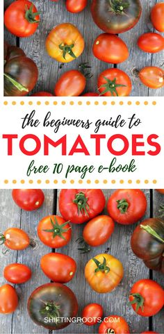 There's nothing like the taste of a fresh, ripe garden tomato off the vine! Learn how to grow your own tomatoes with plenty of tips for starting from seed, what varieties are best, and how to process them at harvest time. Whether you're growing them in a backyard garden, in containers, or in raised beds with a trellis, you'll learn how to grow the best tomatoes. #tomatoes #growingtomatoes #gardening #vegetablegardening #tomato #freedownload #gardeningresources #gardeningideas