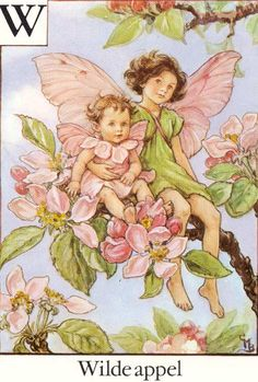 Illustration for the Apple Blossom Fairy from Flower Fairies of the Alphabet - author / illustrator Cicely Mary Barker Cicely Mary Barker, Flower Fairies, Elfen Fantasy, Fairy Pictures, Vintage Fairies, Vintage Art, Vintage Decor, Fairy Coloring, Fantasy Illustration