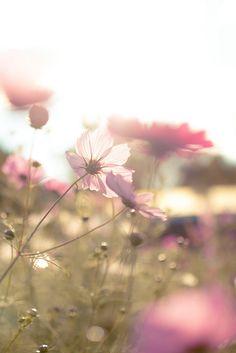 soft summer...