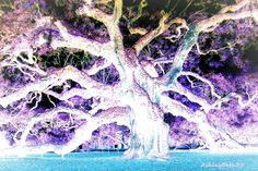 Photography editing magic.  This is a color inversion of a photo I took of the Angel Oak on Johns Island, SC.