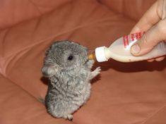 15 животных, которых вы вряд ли видели новорождёнными