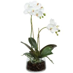 ROGUE PHALAENOPSIS ORCHID SMALL Freedom Furniture $99.00