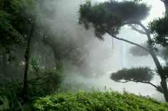 Jungle atmosphere humid    ///.  ❝∗∘∙↝ stay you, but be a radder version ↜∙∘∗❞