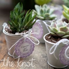 Succulent Escort Cards    Each guest received a mini potted succulent.