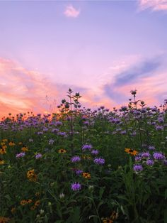 #flowers #saturation #summer #vsco #vscochallenge #vscox #magichour #minneapolis | evagureg0 Nature Aesthetic, Flower Aesthetic, Purple Aesthetic, Summer Aesthetic, Aesthetic Photo, Aesthetic Pictures, Aesthetic Backgrounds, Aesthetic Wallpapers, Images Esthétiques