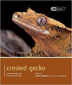 buy crested geckos online uk