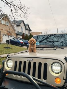 Fantastic Dream cars images are readily available on our site. Super Cute Puppies, Cute Baby Dogs, Cute Little Puppies, Cute Little Animals, Cute Funny Animals, Dogs And Puppies, Doggies, Baby Animals Pictures, Cute Animal Pictures