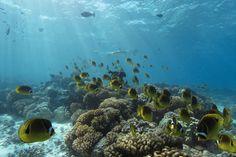 Tuamotu Islands | 12