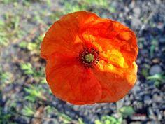 Kwiaty - dużo zdjęć | To co wokół nas czyli świat oczami amatorki Malinki