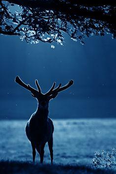 """magicalnaturetour: """"Deep Blue"""" by Simon Roy :)"""