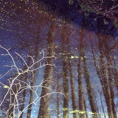 Constelații de mătasea broaștei #reflectat by kjmecklenfeld
