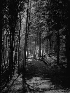 Freaky Forest Photography - These Fabio Orsi Captures are Haunting and Dark (GALLERY)