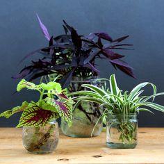 grow-indoor-plants-in-glass-bottles-apieceofrainbow (19)