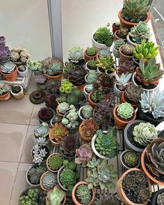 25 Types of Succulents & How to Grow It for Beginners Succulent Rock Garden, Succulent Outdoor, Succulent Landscaping, Succulent Gardening, Succulent Care, Types Of Succulents, Cacti And Succulents, Planting Succulents, Kalanchoe Blossfeldiana