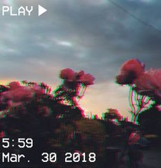 M O N V E I S 1 0 Vhs Aesthetic Sunset Flowers Pink Orange