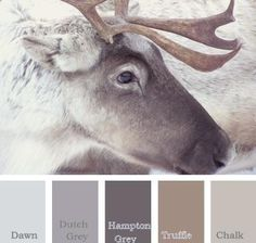 rustieke stoere en warme kleuren , color inspiration, calm winter color palette, love these neutral winter colors.remind me of looking out the window while sitting by the fire place. view of a winter wonderland Color Palate, Color Tones, Design Seeds, Paint Schemes, Color Swatches, House Painting, Painting Walls, House Colors, Wall Colors