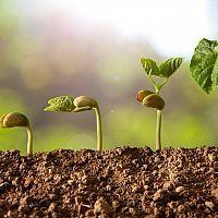 Sadenie mrkvy, hrachu, fazuľe, cibule či kalerábu – kedy a ako La Germination, Agriculture Industry, Background Design Vector, Organic Farming, Coops, Growing Your Business, Natural World, How To Make Money, Nutrition
