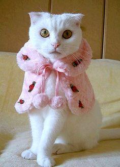 """""""hello i'm kitty"""""""