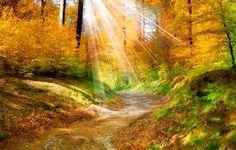 landscape forest summer - Căutare Google