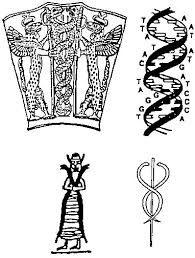 Резултат с изображение за symbol for human dna