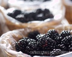 Blackberries by maywong on Etsy, $25.00