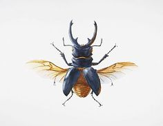 Large Stag Beetle - insect, bug, beetle, stag beetle by Dinah Wells