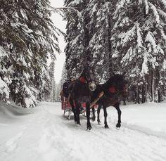 Sanie cu zurgălăi în zăpadă iarna - peisaj de iarnă, cai sanie nea și omăt Cai, Romania, Snow, Country, Outdoor, Outdoors, Rural Area, Country Music, Outdoor Games
