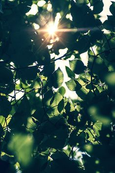 29 ideas nature aesthetic green wallpaper for 2019 Spring Photography, Nature Photography, Photography Jobs, Photography Flowers, Photography Classes, Photography Internships, Forensic Photography, Shape Photography, Photography Lighting
