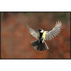 Global Gallery 'Fly' by Barre Thierry Framed Photographic Print Size: