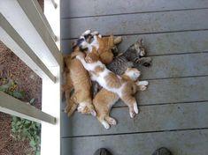 Un montón de gatos...;)