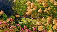 Tampereen Kiovanpuiston kukkaloistoa syyskuun 8. päivä #Tampere #Kiovanpuisto