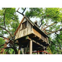 【leeyongchao】さんのInstagramをピンしています。 《When I was a child, I wanted to have a tree house of my own. 當童年時,我想擁有一個屬於自己的樹屋。 #treehouse #cabins #chalet #littlehouse #childhood #memory #tree #green #forest #house #wood #window #小木屋 #樹屋 #treehouse #dream #play #happy #child  #sky #樹 #大樹 #森林 #台中 #童年 #童年回憶 #taiwan》
